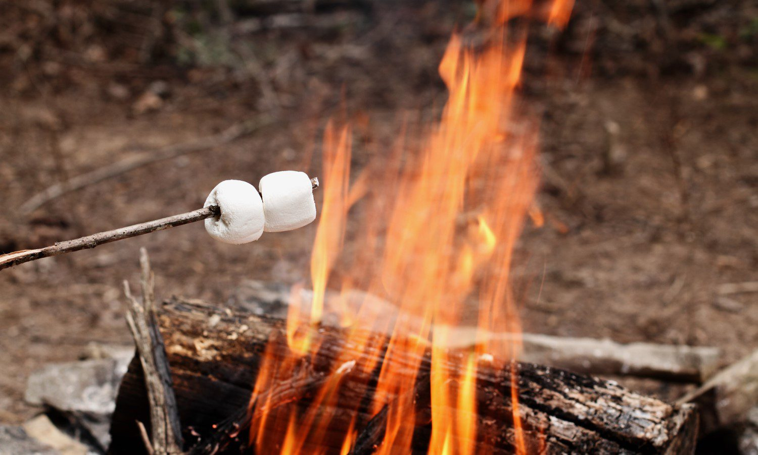 Making marshmallows over a camp fire