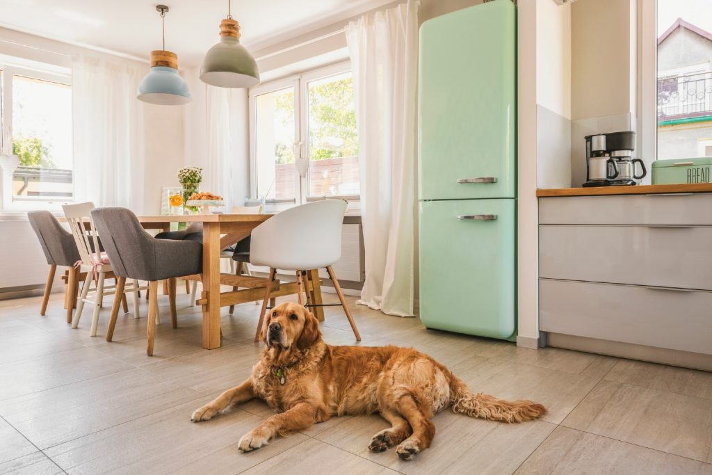 A dog laying in a combined dining room/kitchen