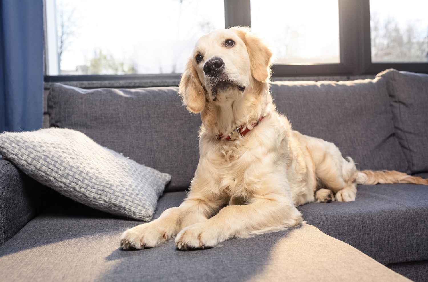Cute dog sitting on gray couch